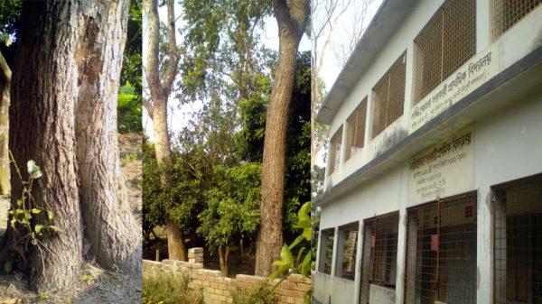 দৌলতপুরের  লক্ষিকোলা সরকারী প্রাথমিক বিদ্যালয়ের প্রধান শিক্ষকের বিরুদ্ধে  গাছ বিক্রয়ের অভিযোগ