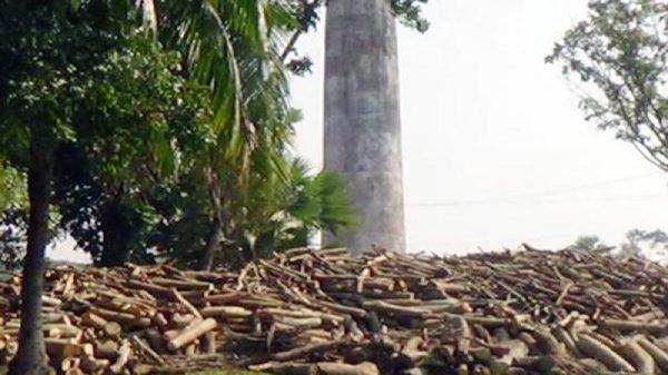 ভেড়ামারা জে এন্ড বি ব্রিকসের পরিবেশ অধিদপ্তরের ছাড়পত্র নেই : কাঠ পোড়ানো হচ্ছে