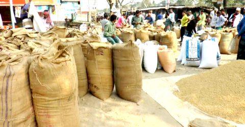 কুষ্টিয়ায় সরকারী মূল্যে কৃষক প্রতি ধান ক্রয় বরাদ্দ প্রায় ৩৮ কেজি