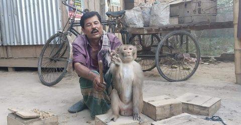 """কাকিলাদহ গ্রামের শারীরিক প্রতিবন্ধী """"সিরাজুল সাপুড়িয়া' বানর ও সাপ নিয়ে চরম দূর্দিনে"""