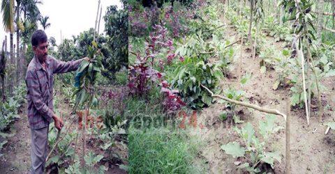 ভেড়ামারায় পল্লীতে শতাধিক আম, লিচু ও মেহেগুনি গাছ কর্তন